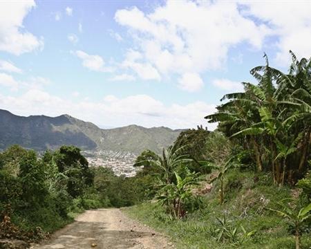 COMULFAC Caturra, Catuai, Bourbon, Catimor, and Marogogype Jinotega, Nicaragua