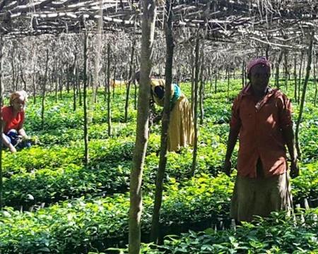 Guji Zone, Oromia Region, Ethiopia Testi Trading PLC