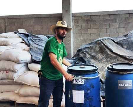 Bourbon, Catuai, Caturra, Lempira, Pacas, and Typica COMSA Marcala, La Paz, Honduras