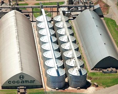Mundo Novo, Cerrado Catuai Cocamar Cooperativa Maringá, Paraná, Brazil