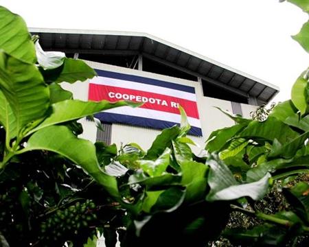 Catuai, Caturra Cooperativa de Caficultores de Dota, San José, Costa Rica El Vapor