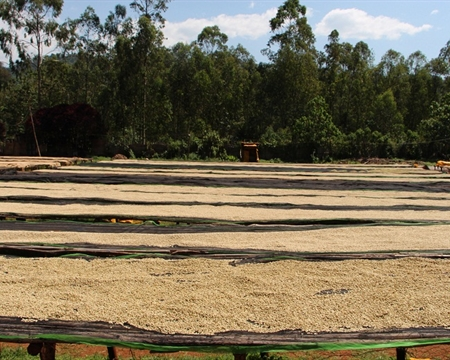 Ethiopia Gedeo Zon Dumerso coffee mill