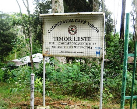 Ainaro, Ermera, and Lequisa, East Timor Bourbon Cooperativa Café Timor (CCT)