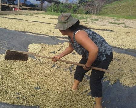 Bourbon, Catimor, Peru Caturra, Pache and Typica Rodríguez de Mendoza Asociación de Productores Palto Café Amazonas