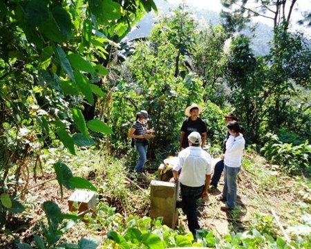 Guatemala Bourbon, Catuai, Caturra, and Typica Smallholder coffee producers