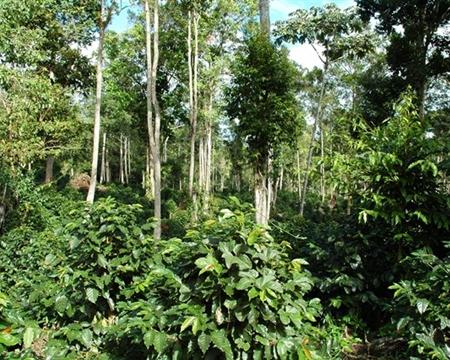 Catuai, Caturra, Bourbon, and Typica PRODECOOP Estelí, Madriz, and Nueva Segovia, Nicaragua