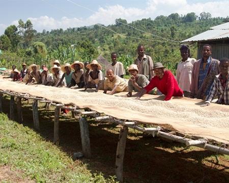 Sidama Zone Ethiopia Indigenous heirloom cultivars