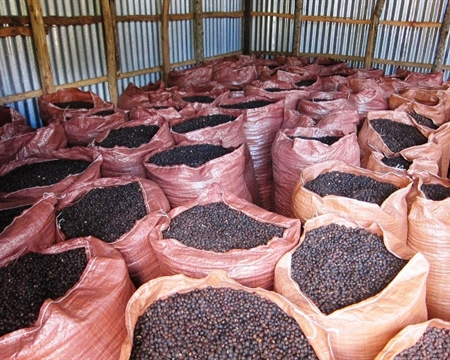 ETHIOPIA Indigenous heirloom YIRGACHEFFE Oromia Coffee Farmers Cooperative