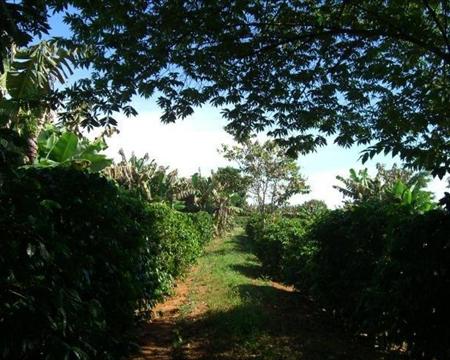 Acaia, Bourbon, Catuai, and Mundo Novo Perdizes, Minas Gerais, BrazilRicardo de Aguiar Resende NOSSA SENHORA DE FATIMA