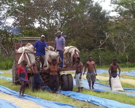 Kimel Banz, Mundo Novo, Blue Mountain, Typica, Arusha, Caturra, Catimor Papua New Guinea Western Highlands, Waghi Valley