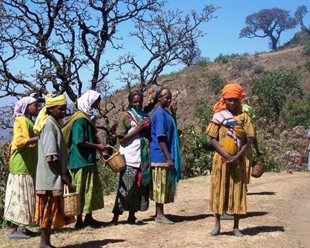 Indigenous heirloom cultivars Abdirashid Abdullahi Harari People's Regional State, Ethiopia