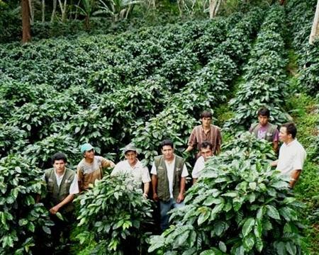 PERU SOL Y CAFE Cajamarca Typica, Caturra, Pache, Mondo Novo, Bourbon, Catuai, and Catimor