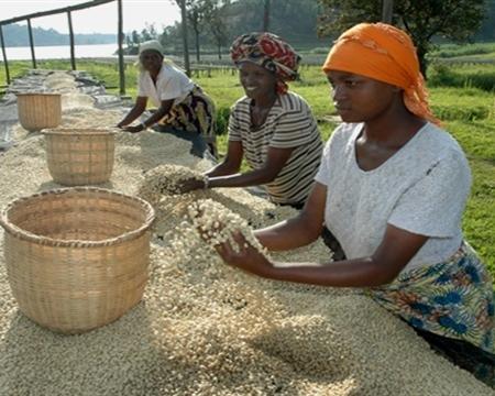 Bourbon COOPAC Mayaguez Rubavu and the Rutsiro districts, located in the Western Province of Rwanda