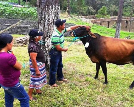 COMSA Marcala Bourbon, Typica, Lempira, Catuai, Caturra & Pacas La Paz, Honduras