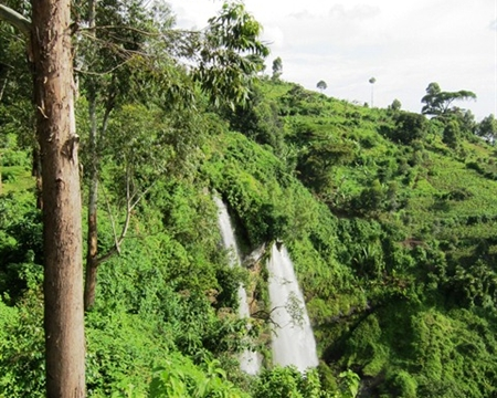 uganda sipi falls Blue Mountain, Bugisu Washed Arabica