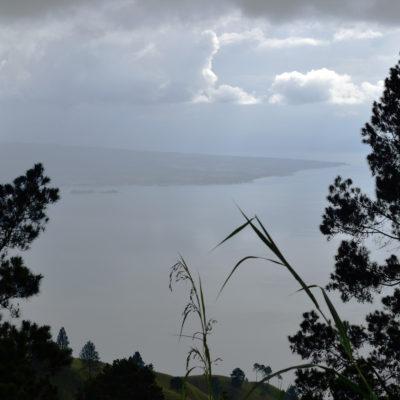 Crown Analysis: CJ1309 - Sumatra Ajibata Lake Toba Wet Hulled Honey Crown Jewel