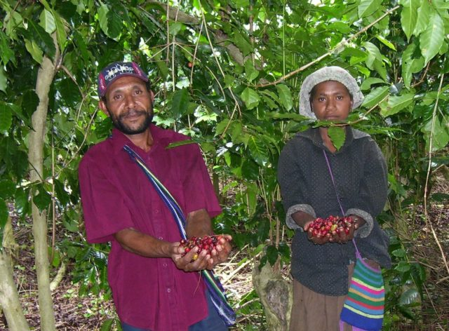 Kimel Banz, Mundo Novo, Blue Mountain, Typica, Arusha, Caturra, Catimor Papua New Guinea Western Highlands, Waghi Valley