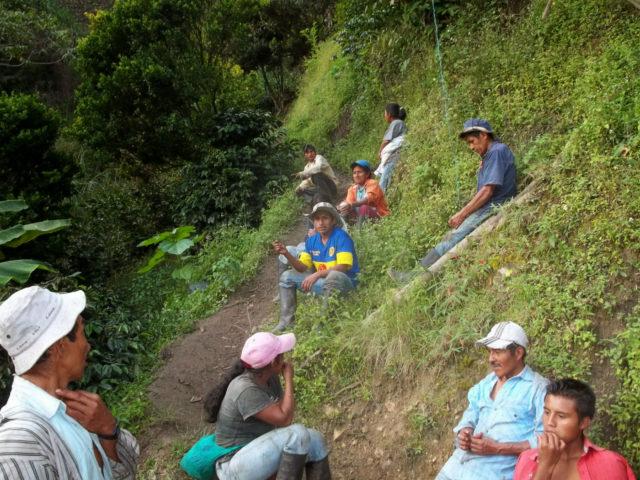 ASCISP Castillo, Caturra, and Colombia Planadas, Tolima, Colombia