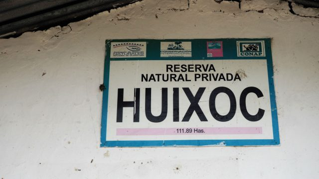 Jose Alejandro Solis Huixoc Bourbon, Caturra, Catuai, and Mundo Novo La Democracia, Huehuetenango, Guatemala