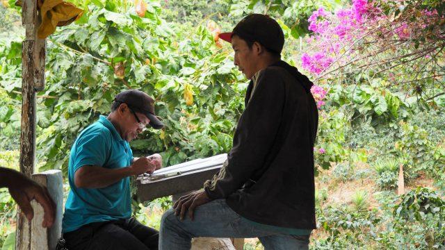 Bourbon, Caturra, and Mundo Novo Jose Alejandro Solis La Democracia, Huehuetenango, Guatemala