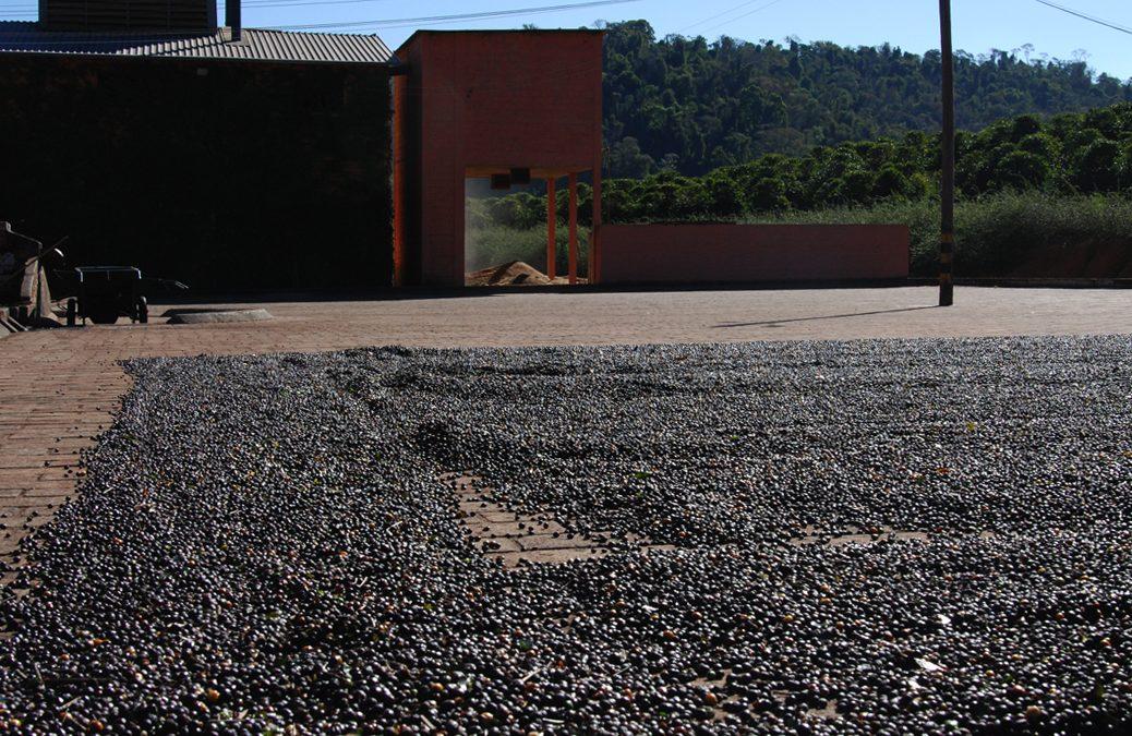 Crown Analysis: 36475 – Brazil Fazenda Rainha Yellow Bourbon Pulped Natural Grainpro