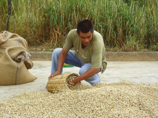 Typica, Bourbon, Mundo Novo, and Caturra Costa, Sierra Sur, Mixteca, Cañada and Papaloapan coffee regions in the state of Oaxaca, Mexico Oaxaqueño/UNECAFE