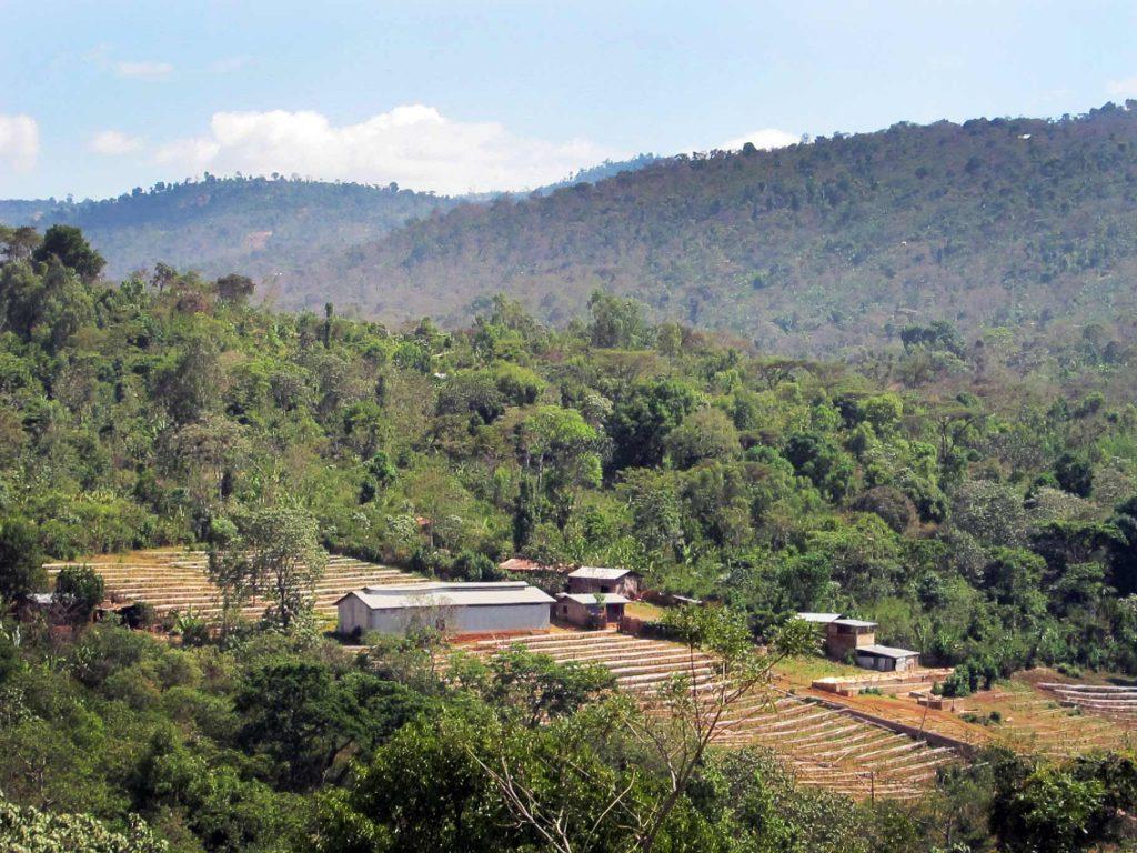 ethiopia-haru-cooperative