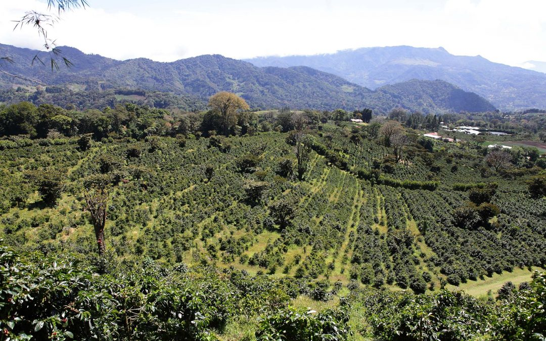 Producer Interview: Sonia Amuruso of Finca Lerida, Panama