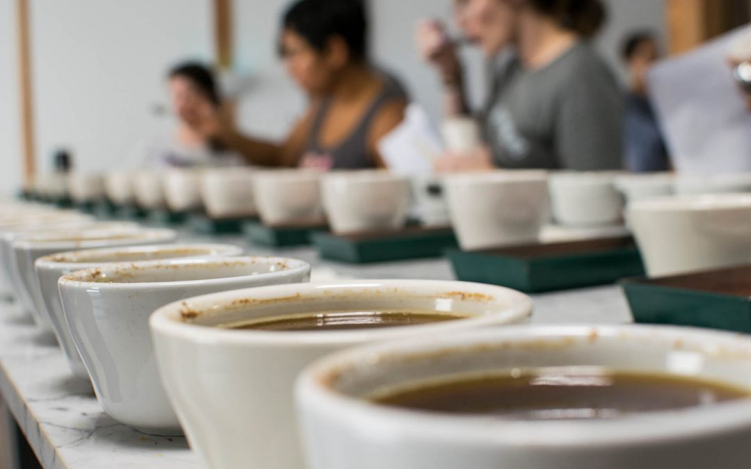 Cupping Basics – How To Set Up & Execute a Great Tasting Experience