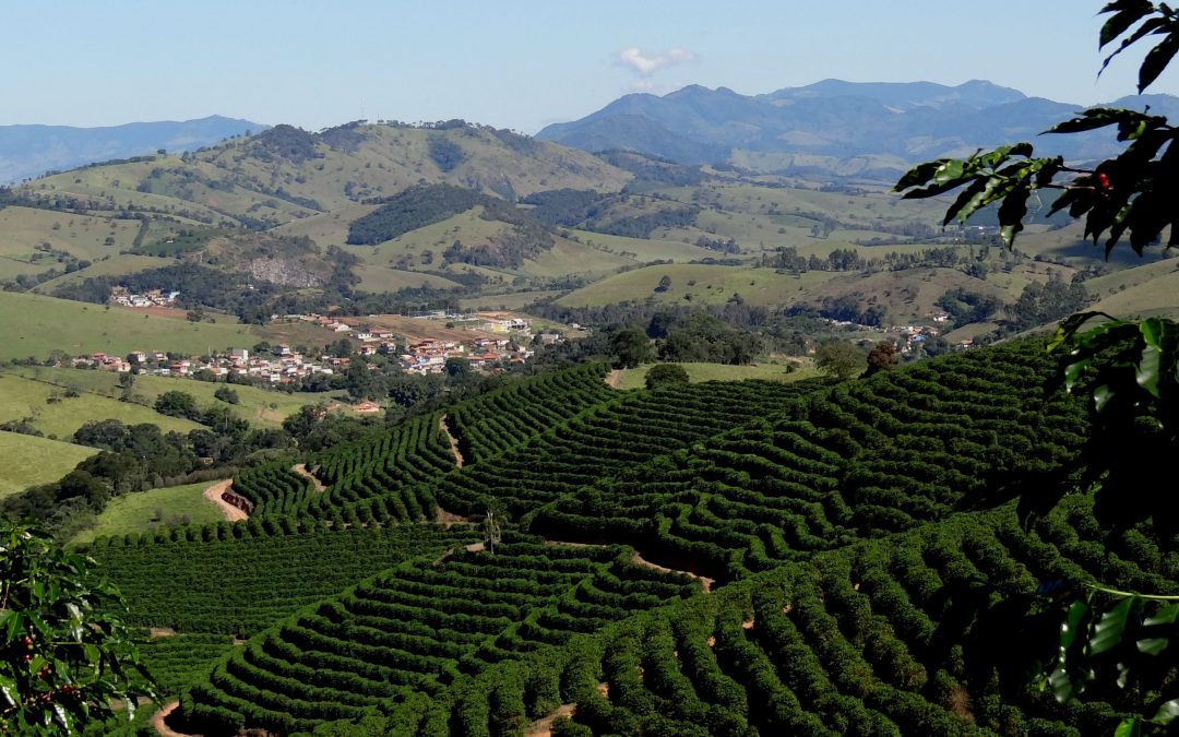 The Coffee Buyers' Cupping Table: Capricornio Coffees from Brazil