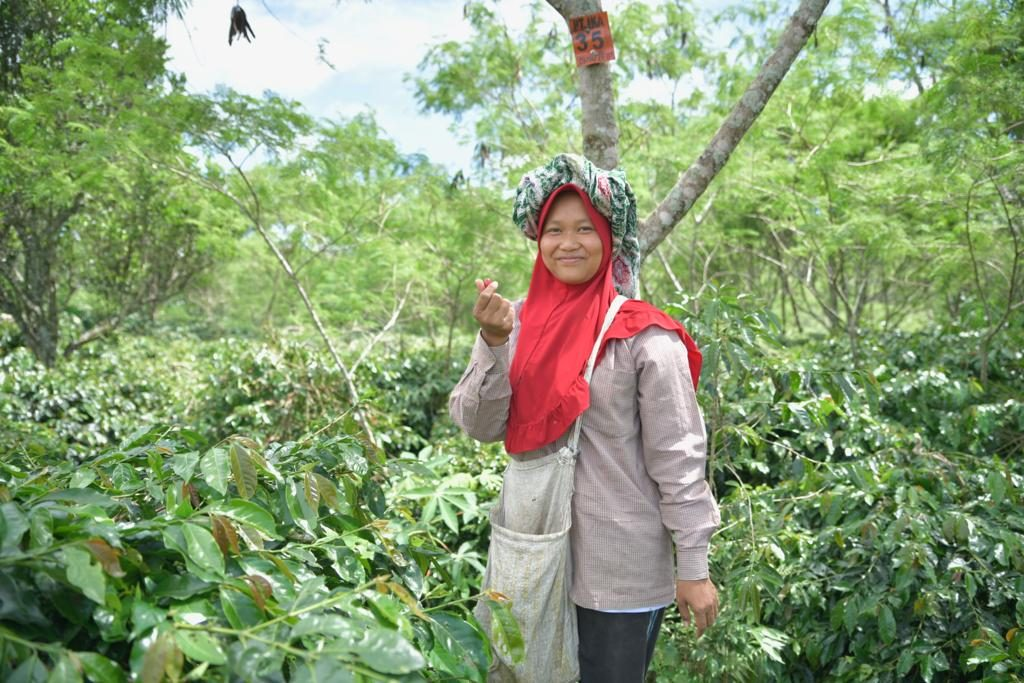 sumatran coffee farmer