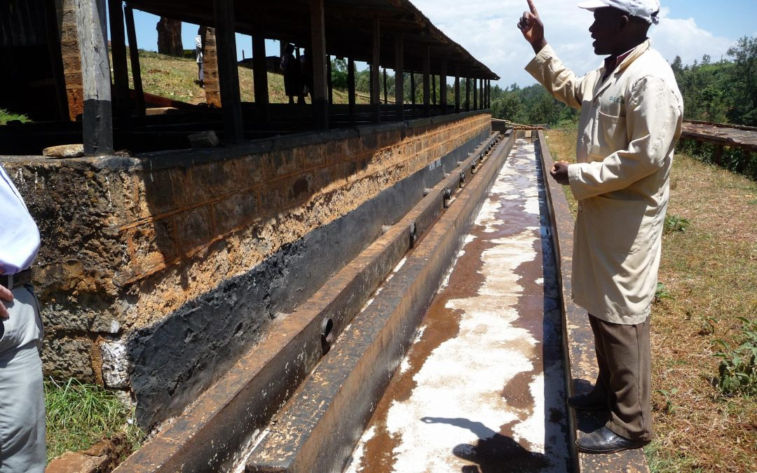 The Coffee Buyers' Cupping Table: Focus on Kenya