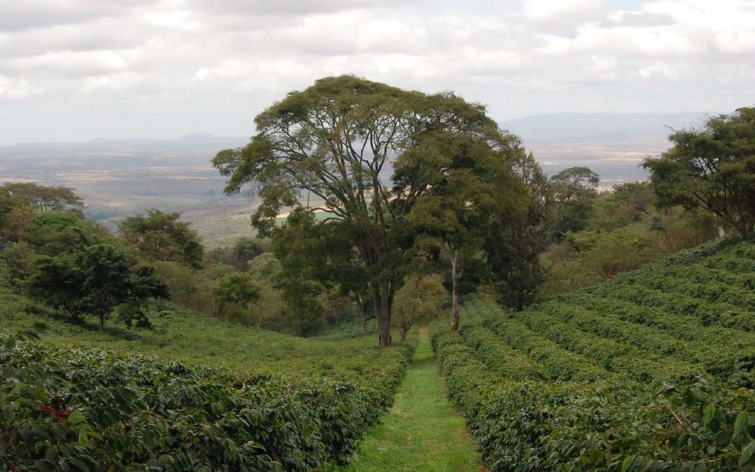 Vast & Varied: Tanzania and Coffee at a Crossroads