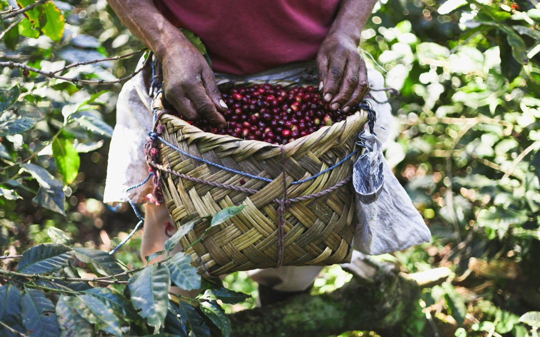 Working Towards Transparency: The Specialty Coffee Transaction Guide