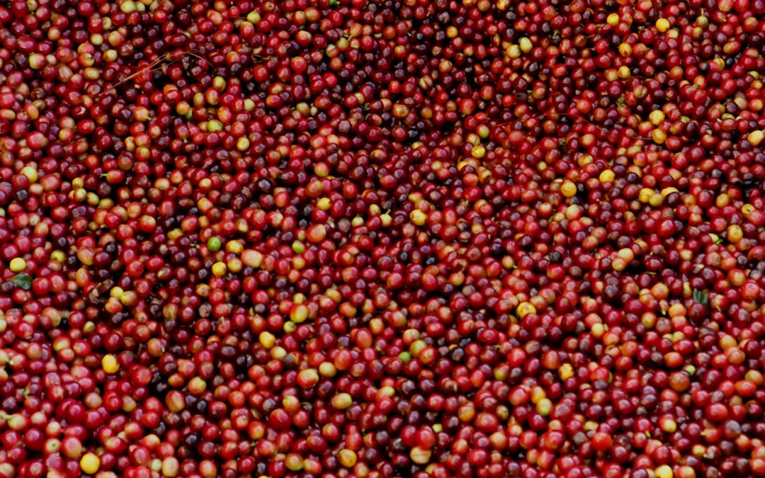 Unpacking the Specialty Coffee Transaction Guide