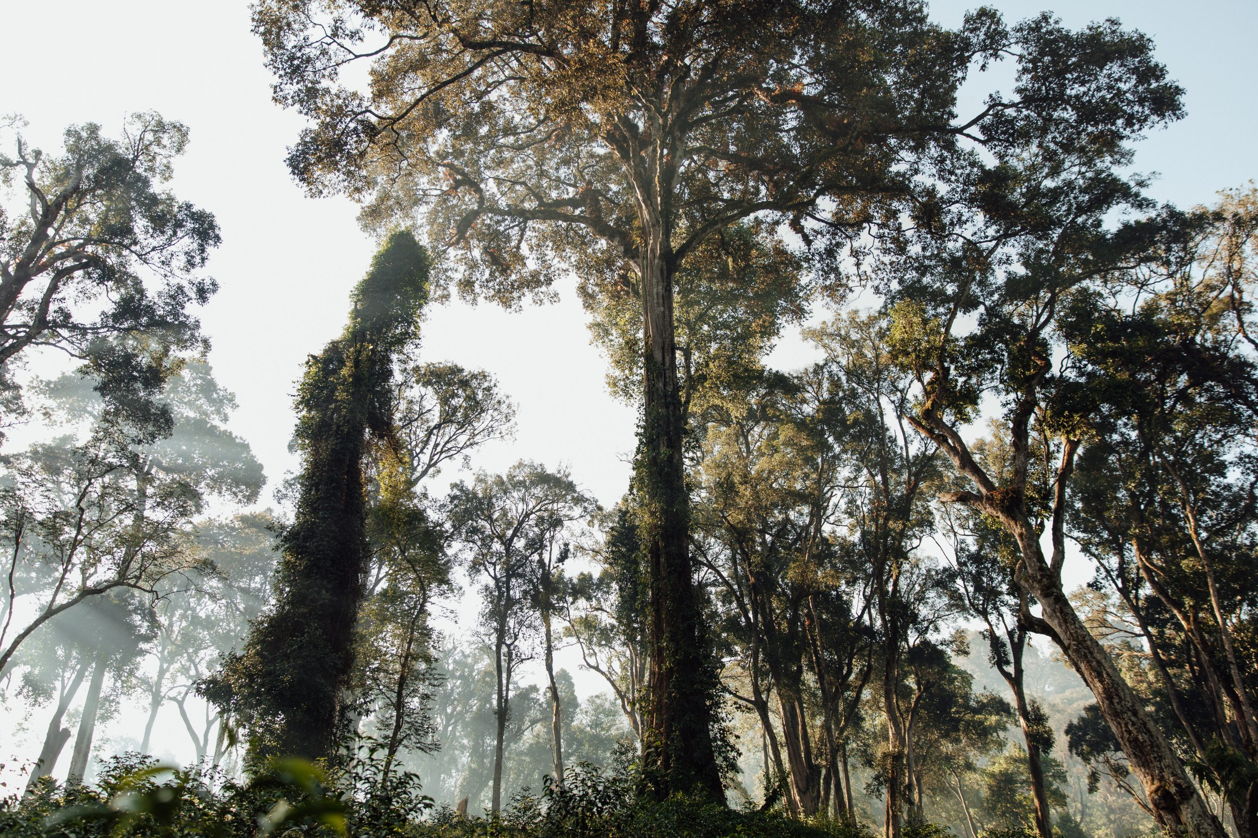 Ethiopia: Coffee's Heirloom