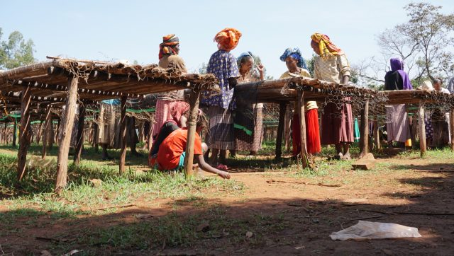 Drying parchment in the Dara district, Sidama, Ethiopia.