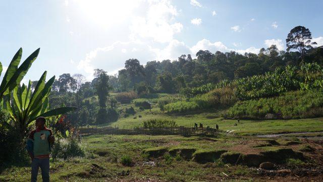 Farming highlands of Western Guji, Ethiopia.