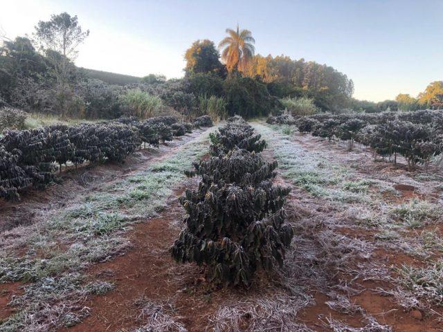 frost in Brazil